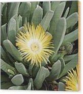 Mesemb (conicosia Elongata) Wood Print