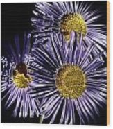 Metallic Daisies Wood Print