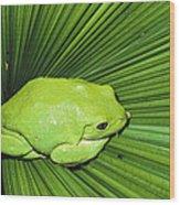 Mexican Giant Tree Frog Pachymedusa Wood Print