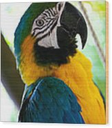 Mexican Parrot Wood Print