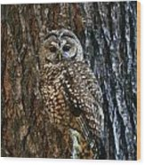 Mexican Spotted Owl Camouflaged Against Wood Print