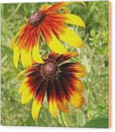 Mexican Sunflowers 2 Wood Print