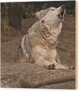 Mexican Wolf Howling Wood Print