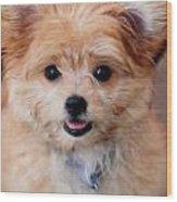 Mi-ki Puppy Wood Print