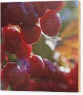 Michigan Pin Cherries Wood Print