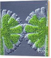 Micrasterias Rotata Wood Print by M. I. Walker