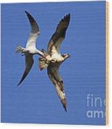 Mid-air Attack Wood Print by Mike  Dawson