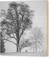Mid Winter- Guardian Tree Wood Print