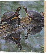Midland Painted Turtles Wood Print