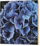Midnight Hydrangea Wood Print