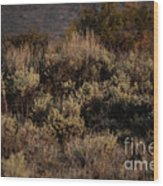 Midnight Sage Brush Wood Print