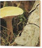 Midway Mountain Morsel 3 Wood Print