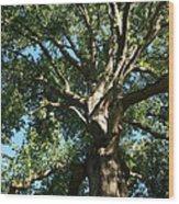 Mighty Oak Wood Print