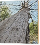 Mighty Tree And The Bark Beetle Wood Print