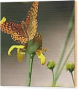 Migrating Butterfly Ser1 Wood Print