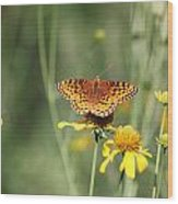 Migrating Butterfly Ser2 Wood Print