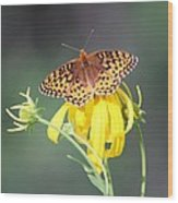 Migrating Butterfly Ser3 Wood Print