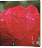 Mikado Tea Rose Wood Print