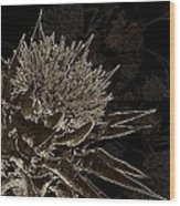 Milk Thistle In Sepia Wood Print