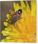 Milkweed Bug Wood Print