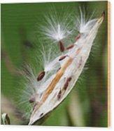 Milkweed Whisper Wood Print
