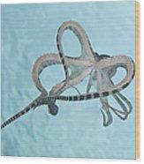 Mimic Octopus Parachuting Down, North Wood Print