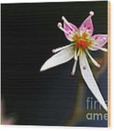 Mini Cactus Flower Wood Print