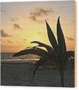Mini Palm Hugging The Sun Wood Print