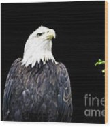 Minocqua Bald Eagle Wood Print