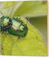 Mint Leaf Beetles Mating Wood Print