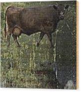 Mirrored Moos  Wood Print