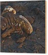 Missing Shoe Wood Print