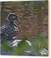 Missy Wood Duck Wood Print