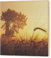 Mist In A Barley Field At Sunset Wood Print