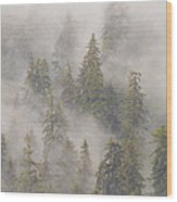 Mist In Tongass National Forest Wood Print