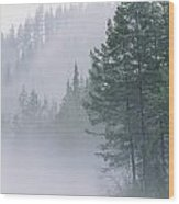 Mist Rises From An Evergreen Forest Wood Print
