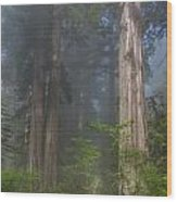 Mists Rising From Lady Bird Johnson Grove Wood Print