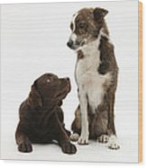 Mixed Breed And Chocolate Lab Wood Print