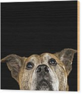 Mixed Breed Dog Looking Up Wood Print by Ryan McVay