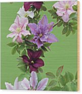 Mixed Clematis Flowers Wood Print
