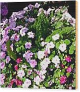 Mixed Impatiens In Dappled Shade Wood Print