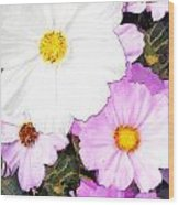 Mixed Pink And White Cosmos Wood Print