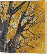 Moab Color Splash Wood Print