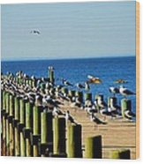 Mobile Bay Meeting Of The Minds Wood Print