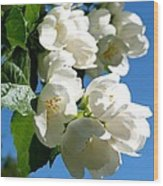 Mock Orange 4 Wood Print