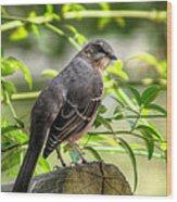 Mocking Bird Wood Print
