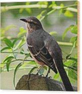 Mocking Bird Picture 3 Wood Print