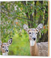 Mom And Baby Deer Wood Print
