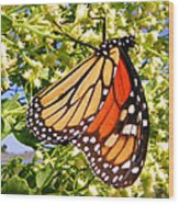 Monarch An Wildflowers Wood Print