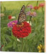 Monarch And Red Zinnia 2009 Wood Print